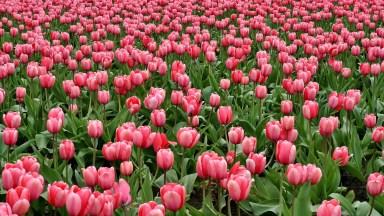 Vídeo De Bom Dia Com Imagens De Flores. A Vida Lhe Espera De Braços Abertos!