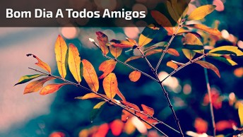 Vídeo De Bom Dia Com Linda Mensagem Para Compartilhar Com Todos Amigos E Amigas!