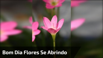Video De Bom Dia Com Lindas Flores Se Abrindo Para Alegrar O Seu Dia!