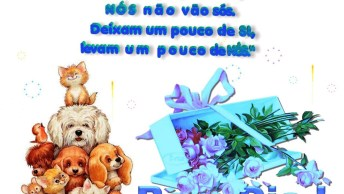 Vídeo De Bom Dia Para Amigo Ou Amiga Do Whatsapp. Simples E Objetivo!