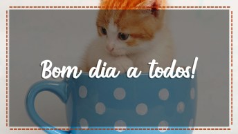 Vídeo Fofo De Bom Dia Para Enviar Para Amigos Do Whatsapp, Perfeito!