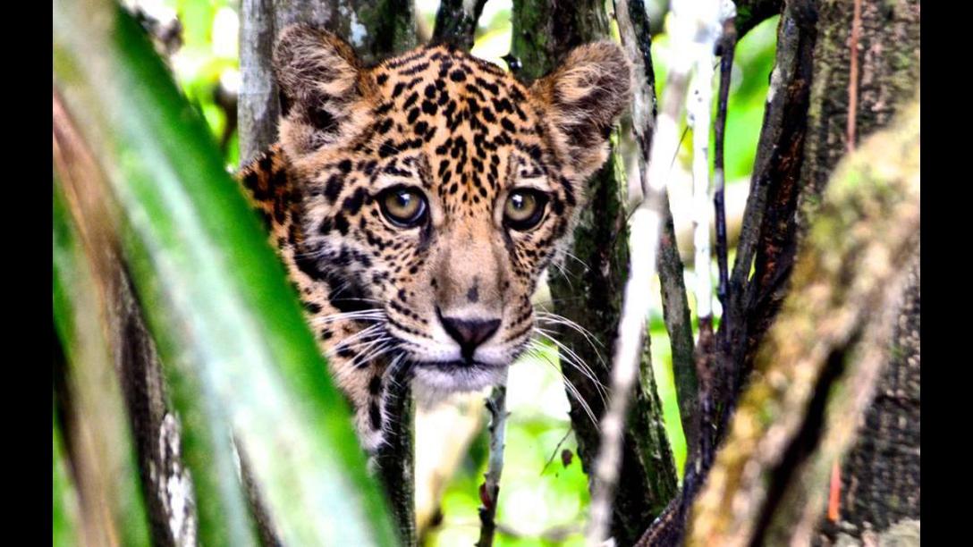 5 de Setembro é Dia da Amazônia