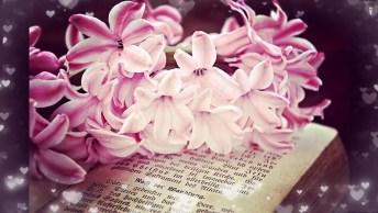 Bom Dia Para Dia De Nossa Senhora Aparecida - Tenha Um Abençoado Dia!