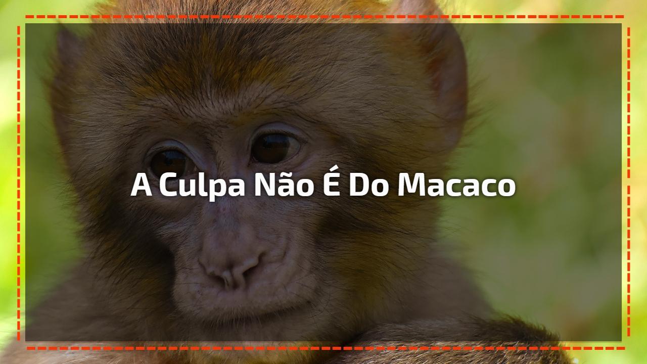 A culpa não é do Macaco