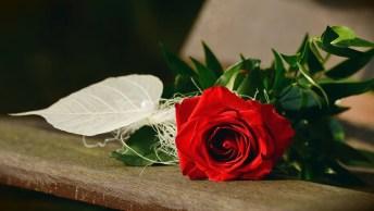 Declaração De Dia Dos Namorados - Você Chegou Para Completar Tudo Que Faltava!