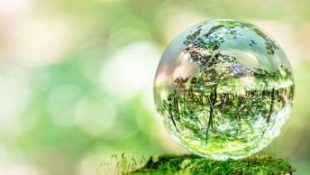 Dia 05 De Junho É Dia Mundial Do Meio Ambiente E Da Ecologia, Faça A Diferença!
