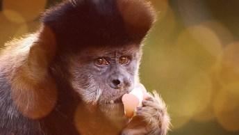 Dia 14 De Dezembro É Dia Mundial Do Macaco - Um Dia Para Alertar A Comunidade!