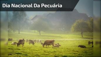 Dia 14 De Outubro É Dia Nacional Da Pecuária, Comemore Este Dia!
