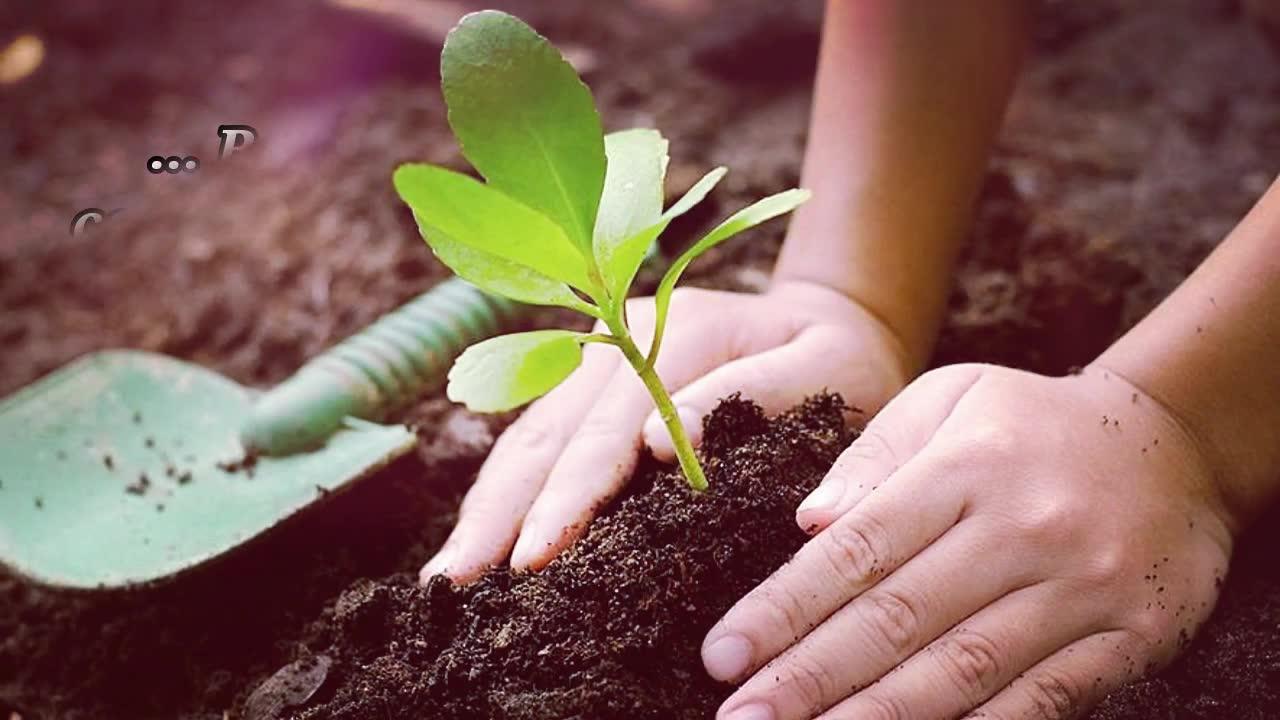 Dia 15 de Abril é Dia Nacional da Conservação do Solo - Confira!