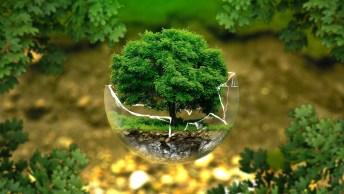 Dia 21 De Setembro É Dia Da Árvore - Na Véspera Da Chegada Da Primavera!