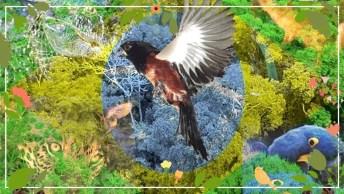 Dia 22 De Fevereiro É Dia Da Criação Do Ibama - Preservando A Riqueza Ambiental!