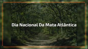Dia 27 De Maio Dia Nacional Da Mata Atlântica, Proteja Esse Patrimônio Nacional!