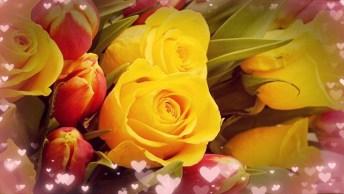 Dia 28 De Abril É Dia Da Sogra - Mensagem De Genro Para Sogra!