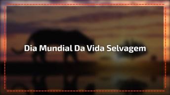 Dia 3 De Março É Dia Mundial Da Vida Selvagem - Um Vídeo Para Celebrar O Dia!