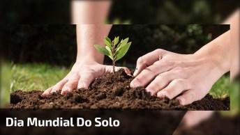 Dia 5 De Dezembro É Dia Mundial Do Solo - Essencial Para A Vida!