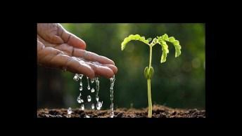 Dia 6 De Fevereiro É Dia Do Agente De Defesa Ambiental, Confira!