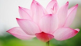 Dia Da Sogra É Dia 28 De Abril, Faça Sua Homenagem Para Sua Segunda Mãe!
