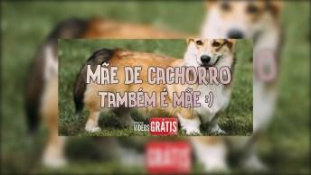 Feliz Dia Das Mães De Cachorro - Feliz Dia Das Mães, Querida Amiga!