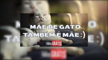 Feliz Dia Das Mães De Gato - Mãe De Gato Também É Mãe!