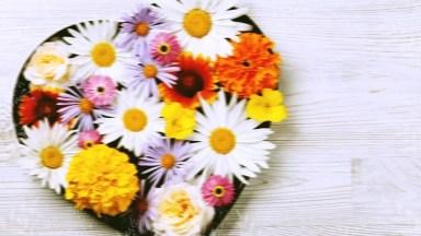 Feliz Dia Das Mães Para Sogra - Feliz Dia Das Mães Para Você, Sogra Querida!