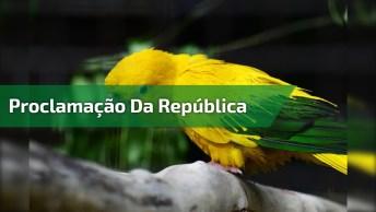 Frases Para O Dia Da Proclamação Da República, Dia 15 De Novembro!