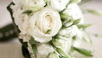 Frases Saudades Dos Que Partiram, Vamos Prestar Homenagens No Dia De Finados!