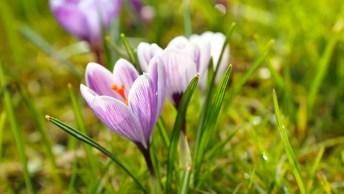 Mensagem De Fim De Semana Com Flores - Que Nunca Nos Falte Fé!