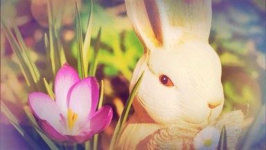 Mensagem De Páscoa Dia Abençoado - Páscoa É Tempo De Se Alegrar!
