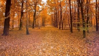 Mensagem Para Dar Boas Vindas Aos Mês De Outubro - Bem Vindo Outubro!