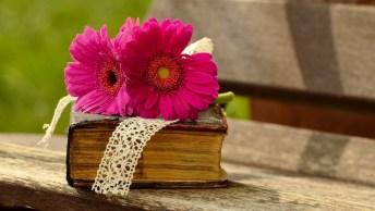 Mensagem Para O Dia Dos Professores, Dia 15 De Outubro, Deus Abençoe A Todos!