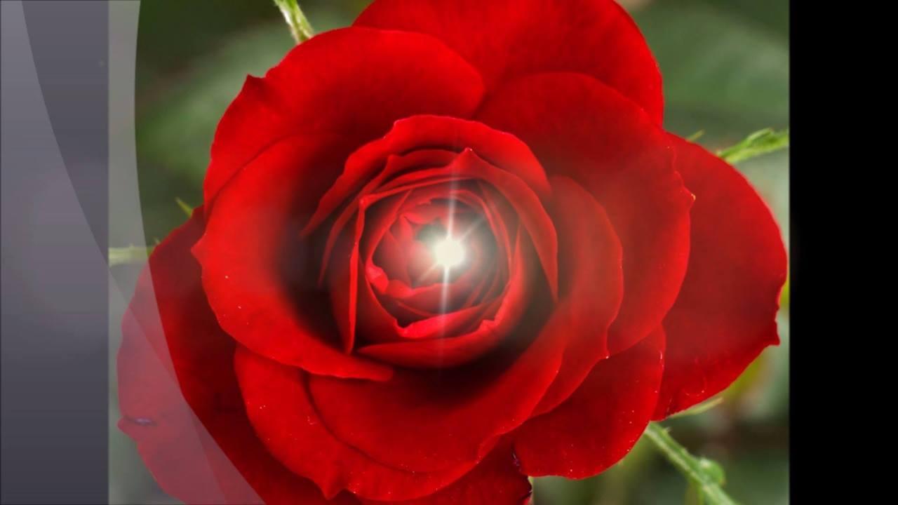 Vídeo com mensagem para o Dia dos Namorados