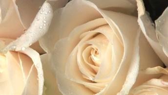 Mensagem De Feliz Aniversário Para Amigo Ou Amiga! Que Seu Dia Seja Excepcional!