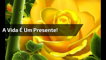 Vídeo Com Mensagem De Aniversário Para Amigo Ou Amiga, Confira!