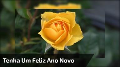 Mensagem De Feliz Ano Novo Para Pessoa Especial. Desejo Que Seja Feliz!