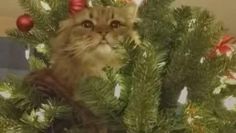 Árvore De Natal A Prova De Gatos, Só Quem Tem Os Dois Vai Entender!