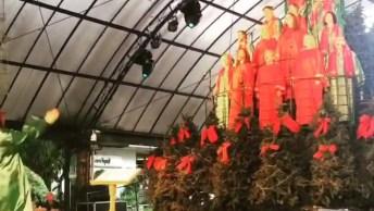 Árvore De Natal Cantante, Faz As Pessoas Lotarem Ruas Para Assistirem!