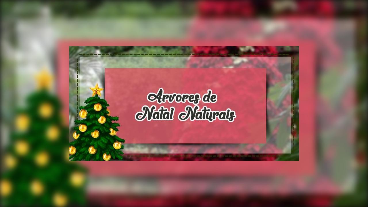 Arvores de Natal Naturais, com flores vermelhas lindas