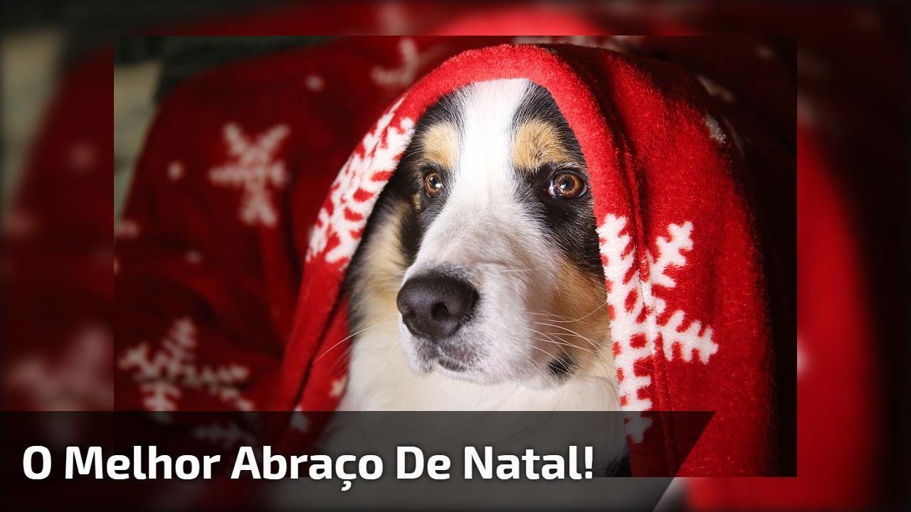 Cachorro Dando Feliz Natal Para Outro Cão Uma Gracinha