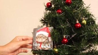 Como É Ter Árvore De Natal Com Gatos Em Casa, Muito Fofinhos Kkk!