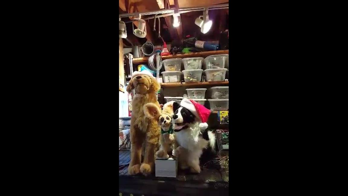 Feliz Natal! Veja como são fofos estes cães cantores de Natal