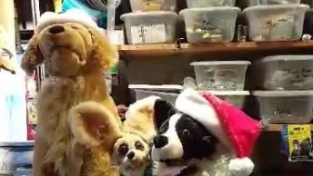Feliz Natal! Veja Como São Fofos Estes Cães Cantores De Natal!