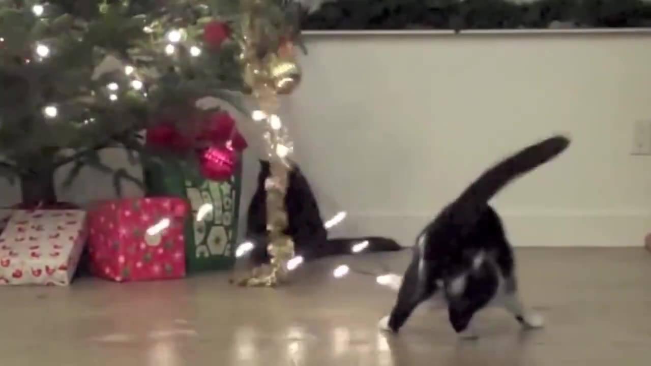 Gatos e suas peripécias com árvores de Natal