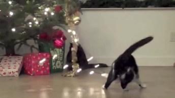 Gatos E Suas Peripécias Com Árvores De Natal, Para Rir Muito!