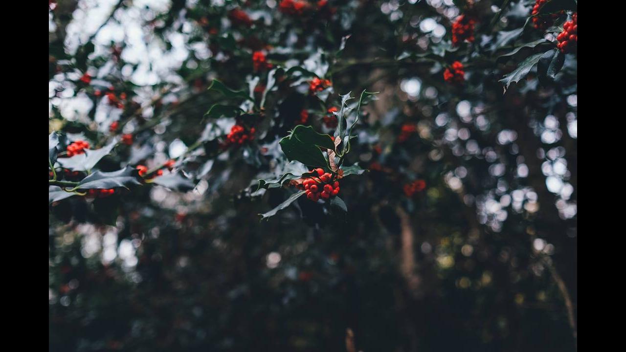 Mensagem De Natal existência de Deus