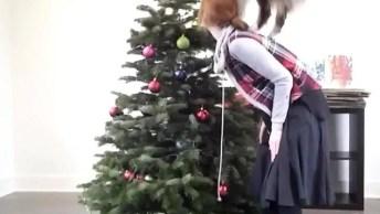 Olha Quem Esta Ajudando A Mamãe A Enfeitar A Árvore De Natal!