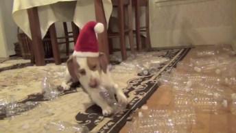 Que Fofura, Imagina Ganhar Aquilo Que Mais Gosta De Presente De Natal!