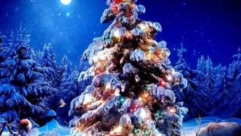Video De Natal Com Música Jingles Bells, Compartilhe Para Desejar Feliz Natal!