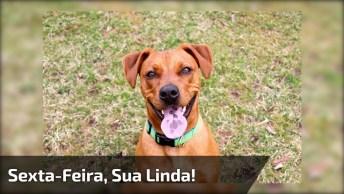 Imagens E Frases Divertidas De Sexta-Feira, Compartilhe Com Amigos Do Facebook!