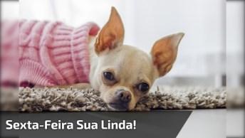 Sexta-Feira Sua Linda Chegou, Envie Esse Vídeo Para Os Amigos E Comemore!