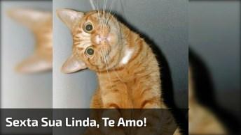 Sexta Sua Linda, Mande Um Oi Para Seus Amigos Do Whatsapp!